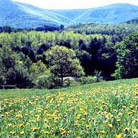 Spring in the Great Barrington, The Berkshires, Wainwright Inn B&B